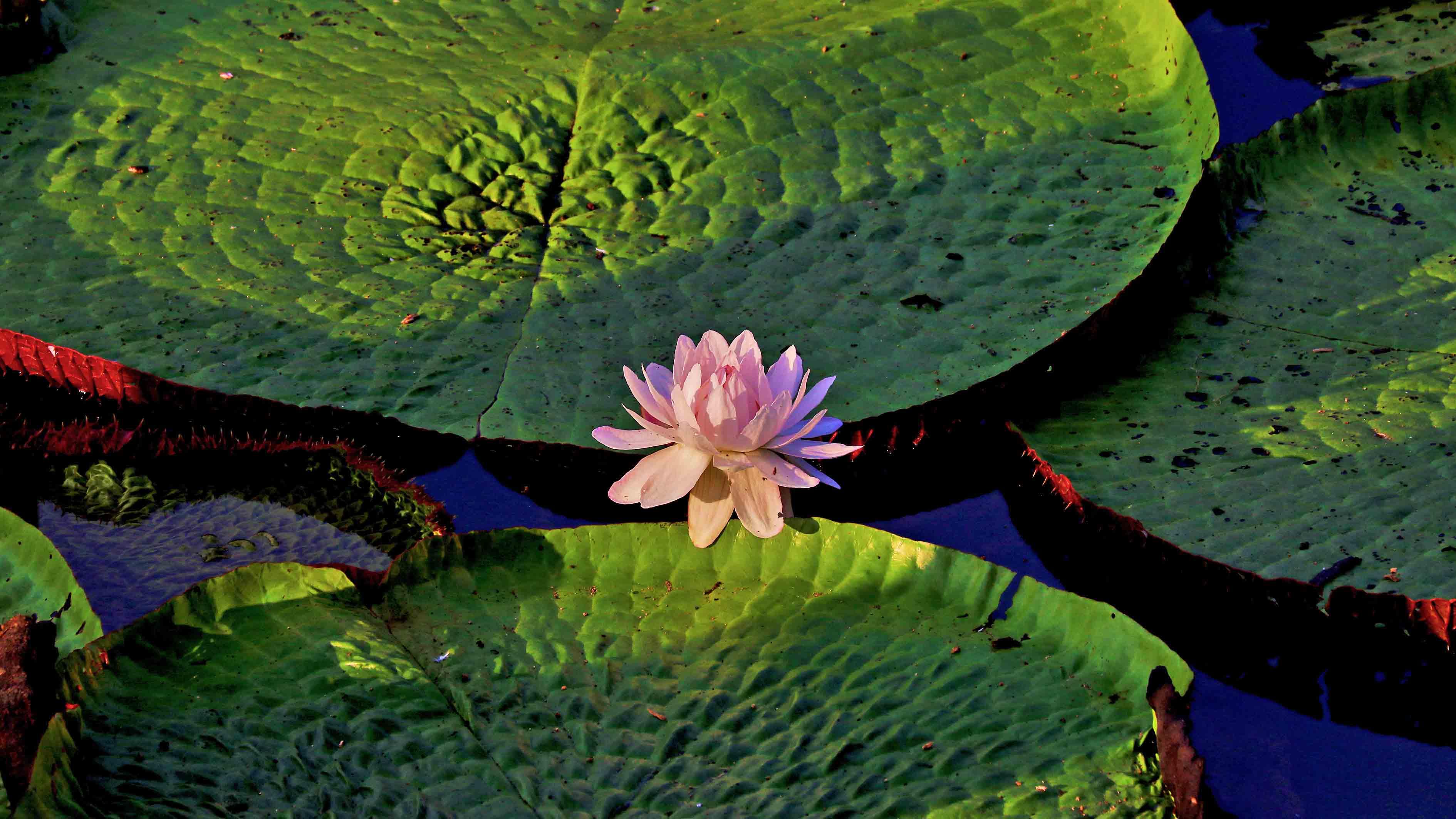 75 premium flora copy